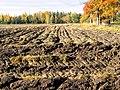 Ploughed field in Lappeenranta.jpg