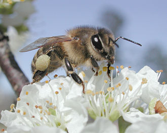 Adaptation - Pollinating insects are co-adapted with flowering plants.