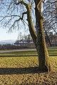 Poertschach Hans-Pruscha-Weg Parkbaeume 29122015 9873.jpg