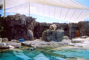 Ping, the Polar Bear, at 'Polar Bear Shores', ...