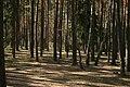 Pole namiotowe, jezioro Głęboczek - panoramio (7).jpg