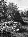 Poletni motiv z gosposkega vrta 1929.jpg