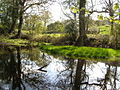 Pond near Longland Barn - geograph.org.uk - 163037.jpg