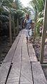 Pont à NBAGA-BAKOKO.jpg