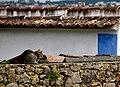 Portugal (10371255344).jpg