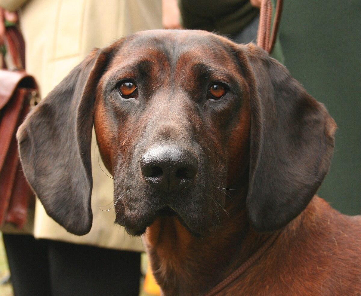 Small Dog Rescue Dallas
