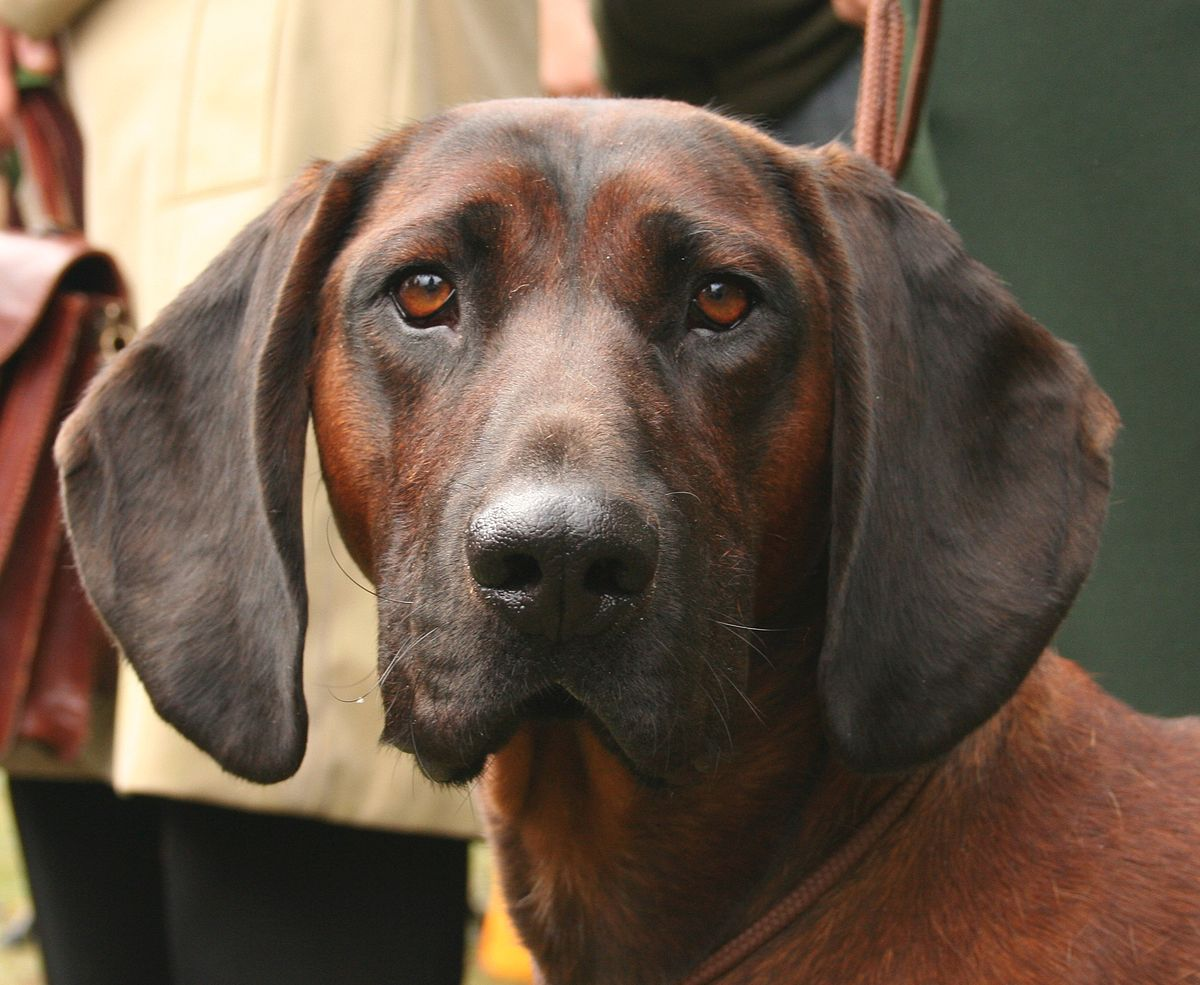 Small Dog Rescue Central Florida