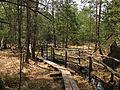 Prügelsteg im Naturpark Heidenreichsteiner Moor 2009-04 2.jpg