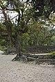 Praia da Baleia - 09-2012 - panoramio (1).jpg