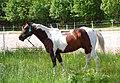 Pretty Horse.jpg
