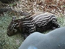 Un cucciolo dorme accanto alla madre