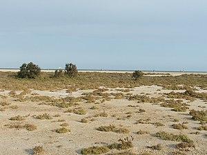 Punta Entinas Sabinar 3.jpg