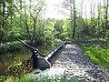 Queich im Bellheimer Wald - geo.hlipp.de - 24943.jpg