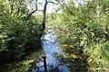 Réserve naturelle Marais Lavours Aignoz Ceyzérieu 116.jpg