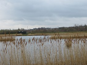 RSPB Dearne Valley Old Moor.jpg