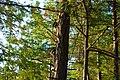 Racoons - panoramio.jpg