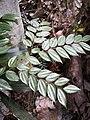 Rain forest 27.jpg