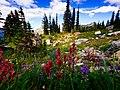 Rainier Naches Loop Trail (43795286).jpeg