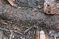 Rapid stream of ants (27238392846).jpg