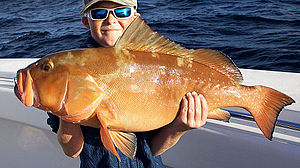 Red grouper - Red grouper caught off Key West in the Florida Keys.