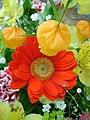 Red flower 1.jpg