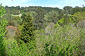 Regional Parks Botanic Garden skyline.jpg