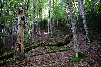 Reserva Integral de Aztaparreta.jpg