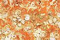 Restes de coquillages et d'algues sur un voile de quille (11).JPG