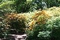 Rhododendronpark Bremen 20090513 210.JPG
