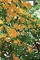 Rhododendronpark Bremen 20090513 217.JPG