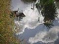 River Cole, Birmingham - geograph.org.uk - 227191.jpg