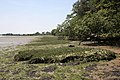 River Stour saltmarsh - geograph.org.uk - 841116.jpg