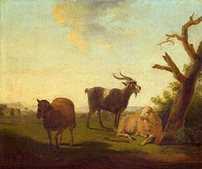Pasture with sheep and a goat.
