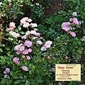 """Rosa """"Easy Cover"""" o POULeas. 03.jpg"""
