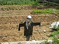 Rosary Sisters--vegetable garden scarecrow. Jerusalem.jpg
