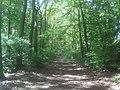 Rotenburg- Waldweg, In der Ahe - geo.hlipp.de - 10505.jpg