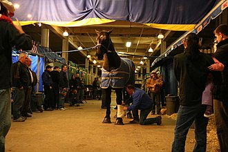 Royal Agricultural Winter Fair - A lineup of horses being polished and wrapped backstage for the show at the Royal Agricultural Winter Fair, November 2008