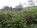 Ruined cottage, Gorticashel - geograph.org.uk - 1547690.jpg