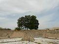 Ruinen mit Baum (3710198814).jpg