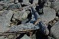 Rusting ironwork, Redcliff Bay - geograph.org.uk - 1757056.jpg