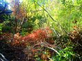 SM.BOUALAM. the colours. Forest of Atlas Mountains.jpg