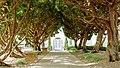 SRF San Diego Cypress Trees.jpg