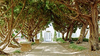 Self-Realization Fellowship - A view of Cypress trees at SRF San Diego Temple hand planted by Paramahansa Yogananda.