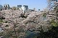Sakura in Chidorigafuchi 20190406-1.jpg