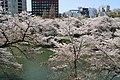 Sakura in Chidorigafuchi 20190406-2.jpg
