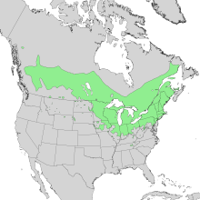 Salix discolor range map 1.png