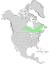Salix pellita range map 0.png