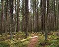 Sallaajärvi nature trail5.jpg
