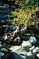 Samothraki-river-platanus.jpg