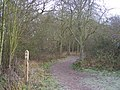 Saxon Shore Way through Northward Hill - geograph.org.uk - 1116624.jpg